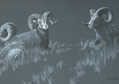 Rams Ridge   36×60″  $4600 Cad