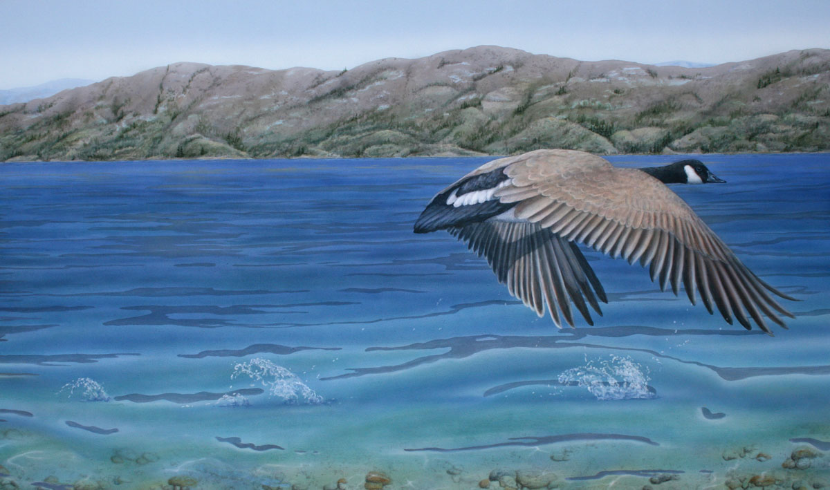 Painting of Canadian Goose by Valerie Rogers