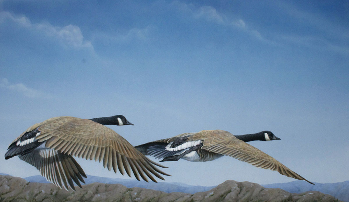 Valerie Rogers painting of Canadian geese Lift Off and Soar