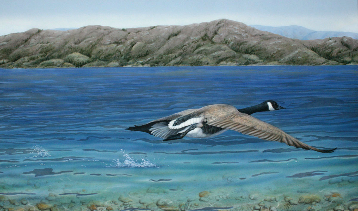Painting of Canada goose by Valerie Rogers