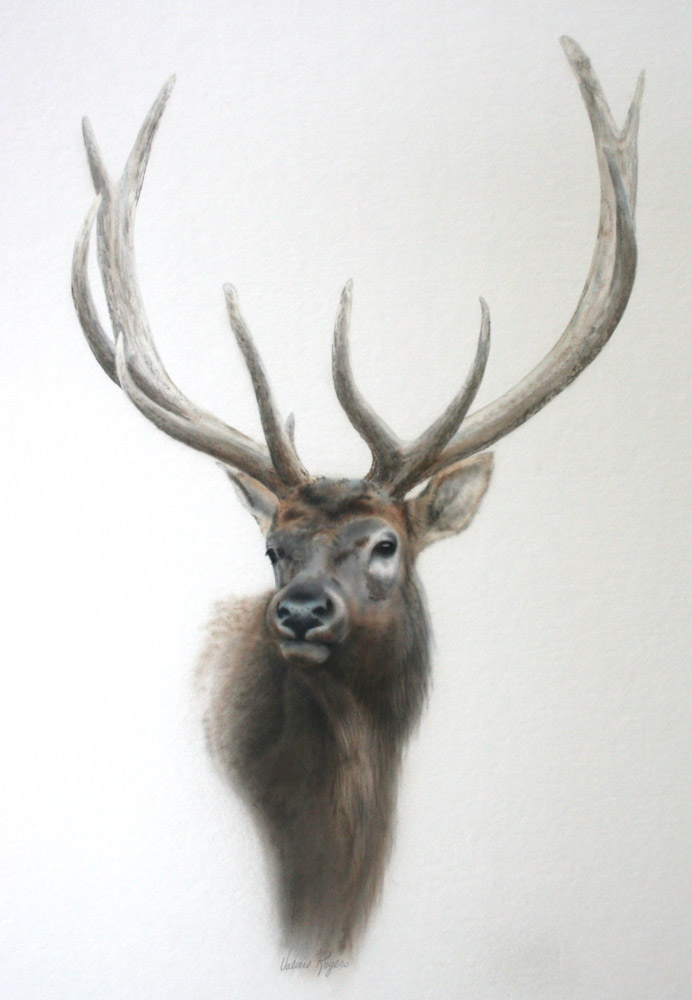Valerie Rogers' vignette of elk head