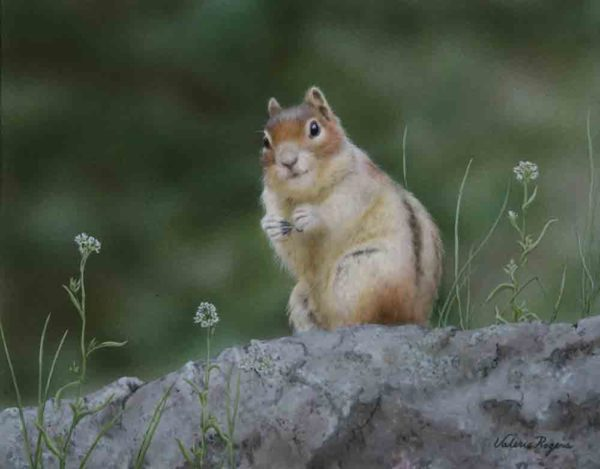Valerie Rogers' acrylic painting of ground squirrel