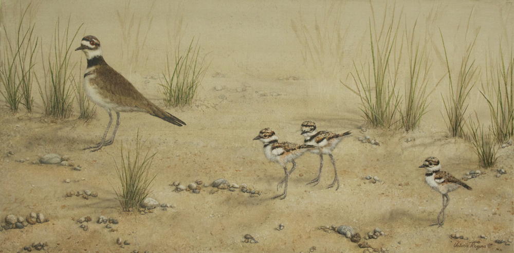 killdeer hen with chicks on sand