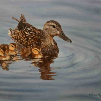 Mallard hen with chicks