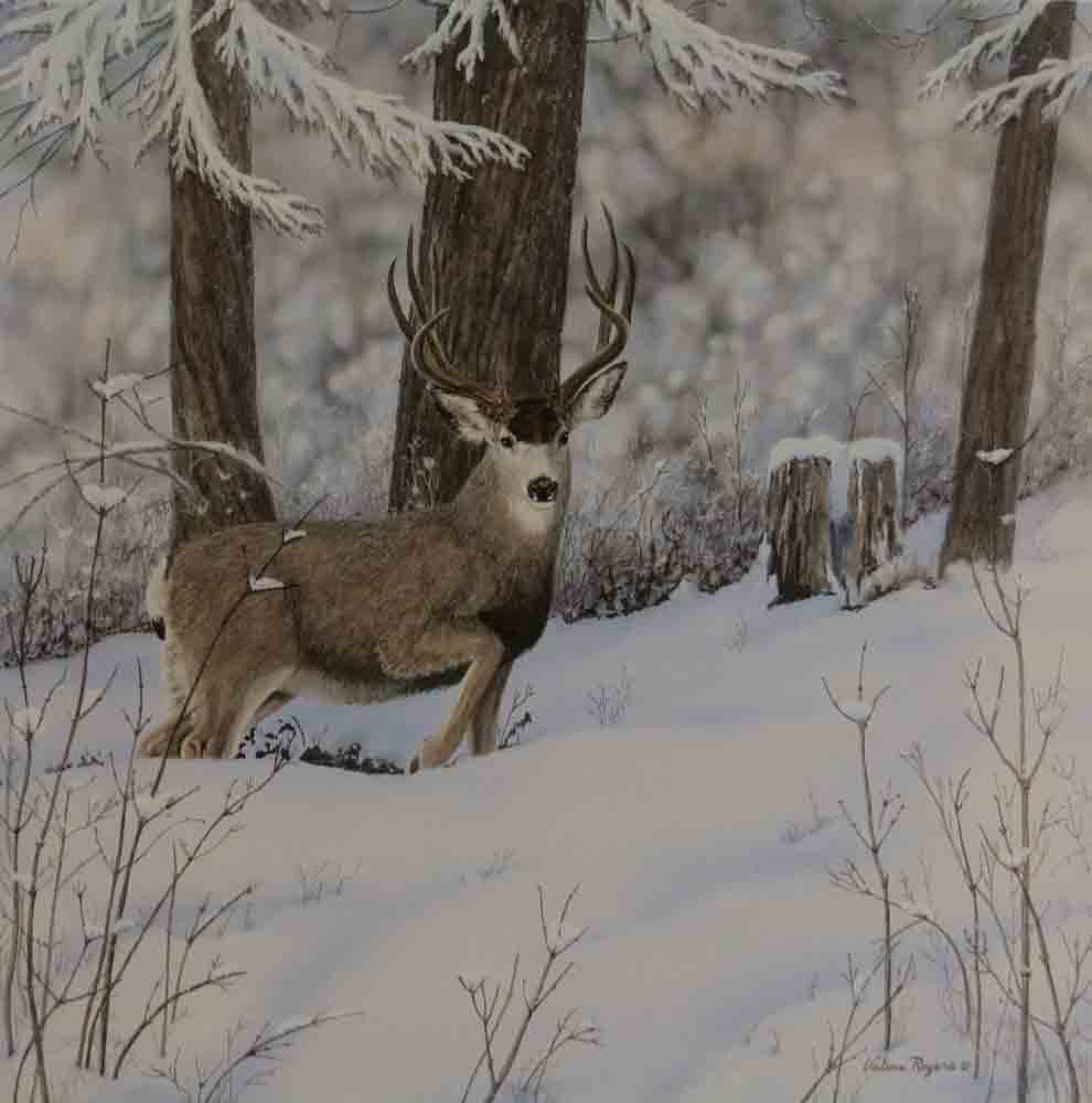 Award winning Valerie Rogers' painting of mule deer in the snow.