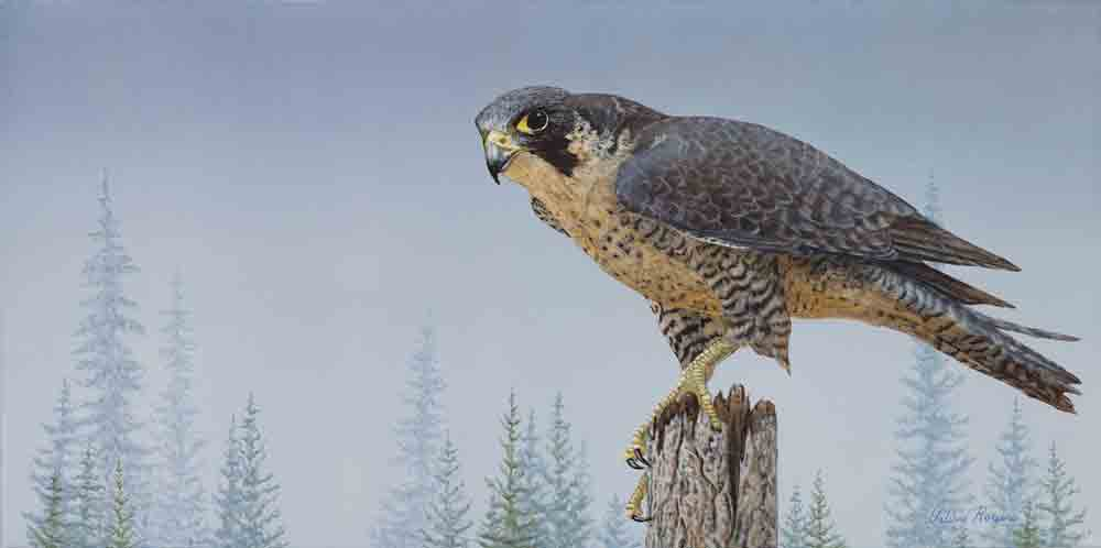 Peregrine Falcon painting by Valerie Rogers