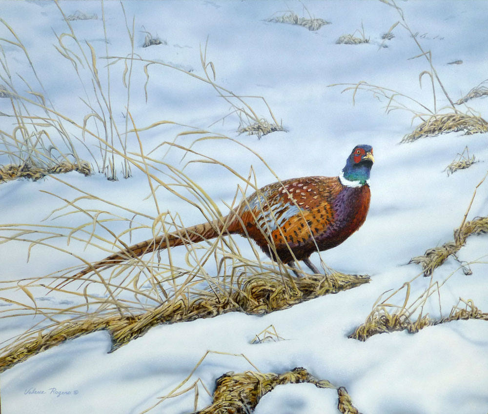 Ringed necked pheasant in the snow by Valerie Rogers