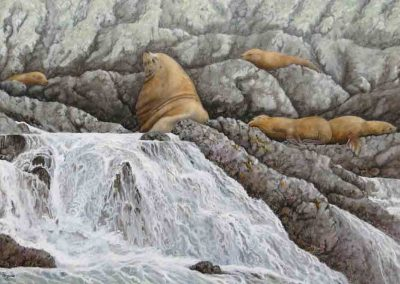 Sea Lion Rock  24×36″    $1895 Cad