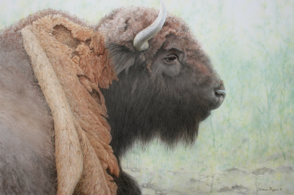 Bison painting Buffalo