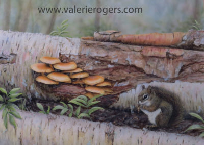 Wild Mushrooms  16×20″  $699 Cad