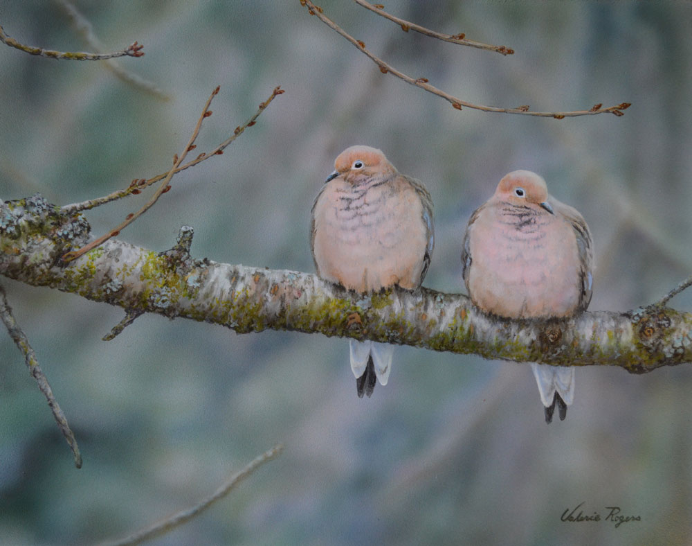acrylic painting of pair of doves by Valerie Rogers