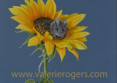 Sunflower Mouse Sold