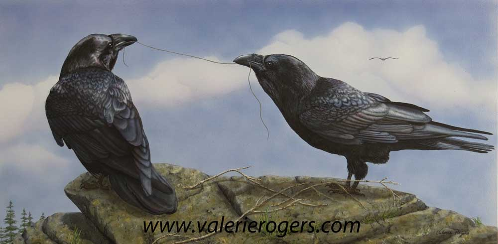 Connected, two Ravens painted by Valerie Rogers