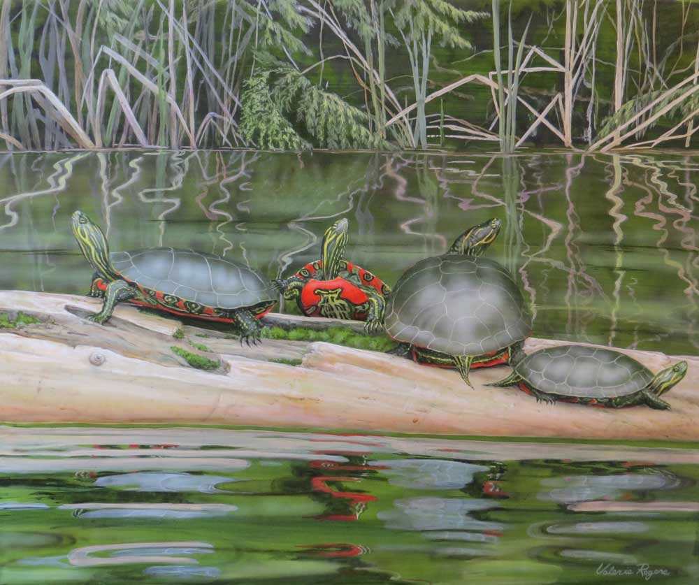 painted turtles on a log by Valerie Rogers
