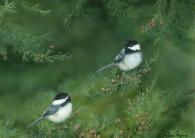 Chickadee Cedar Sanctuary SOLD