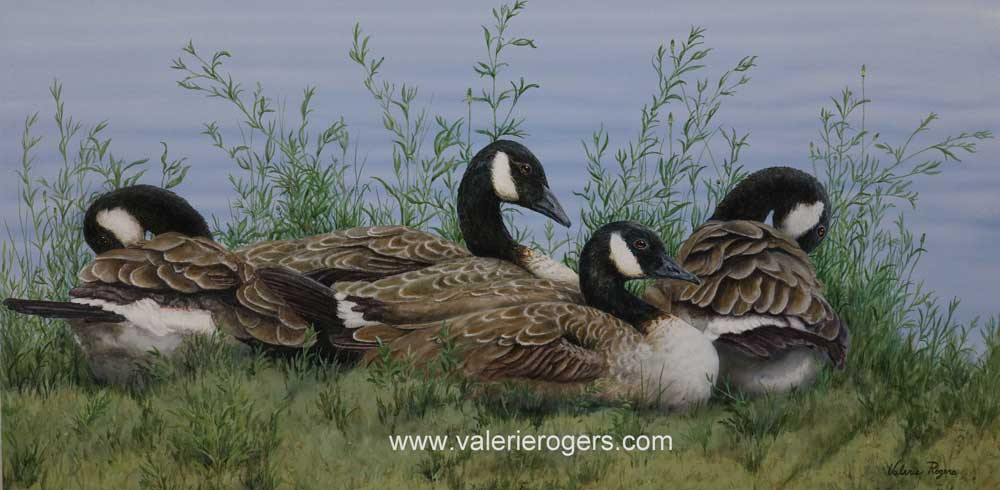 The Wild Ones at Rest, Canada Goose by Valerie Rogers
