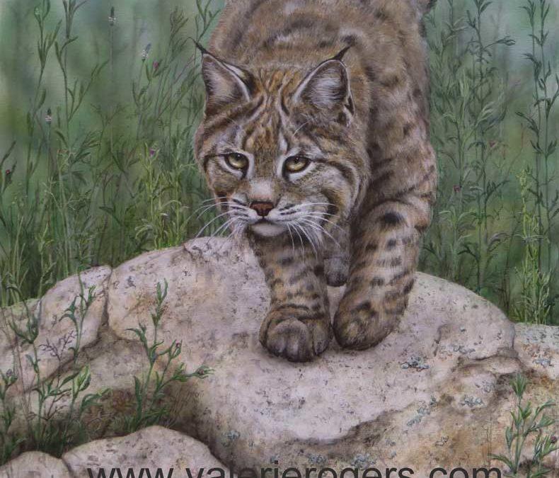 Bobcat  16×20″ $750 CAD
