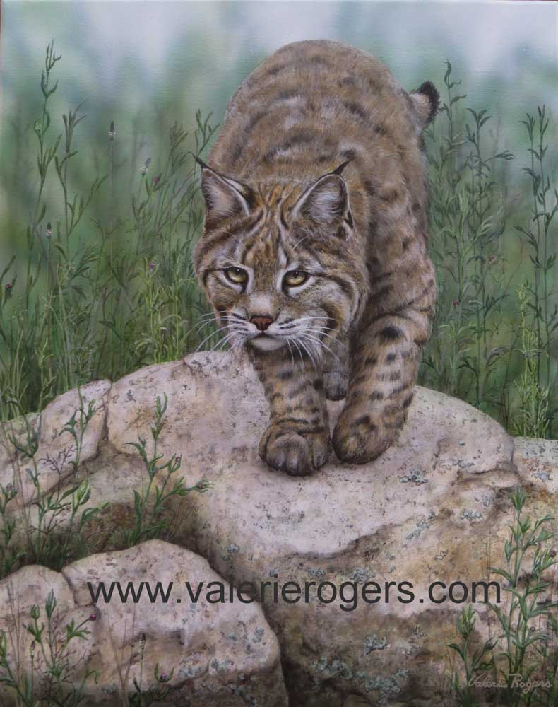 bobcat Painting by Valerie Rogers