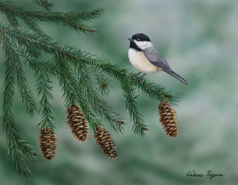 pinecones and chickadee by Valerie Rogers