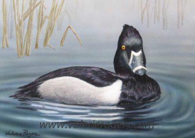 """Ringneck"" Duck 8×10 $200 CAD"