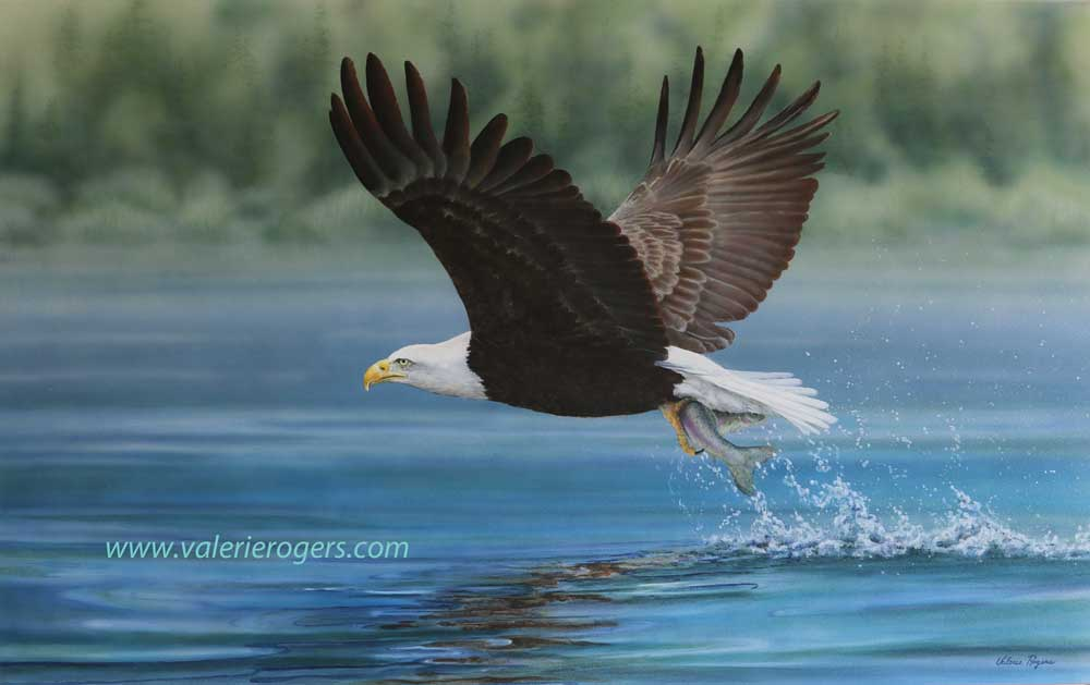 Power & Precision, Eagle painting by Valerie Rogers
