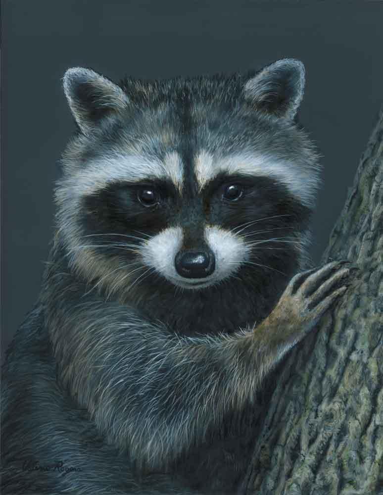 Tree Hugger Raccoon by Valerie Rogers