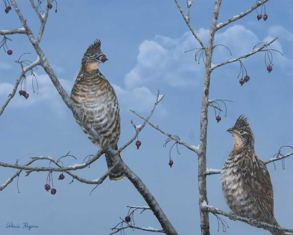 grouse painting by Valerie Rogers