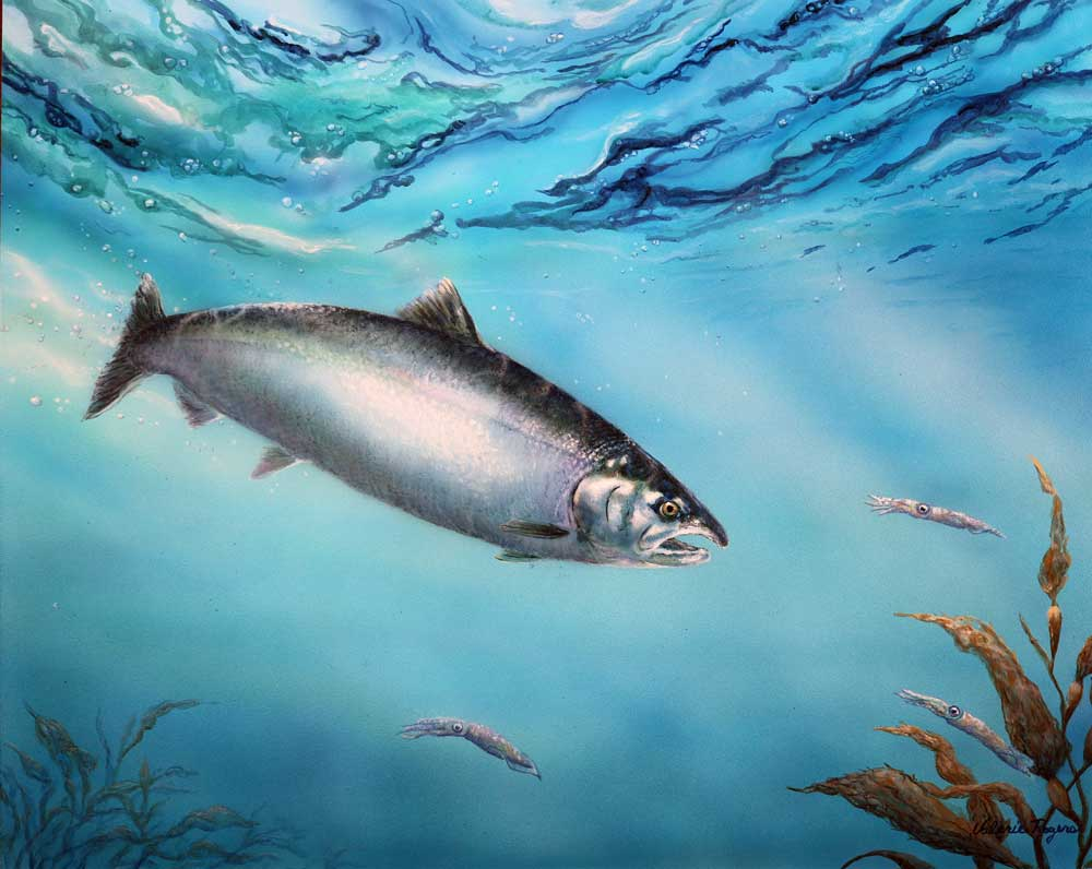 Wild Silver Salmon painting by Valerie Rogers