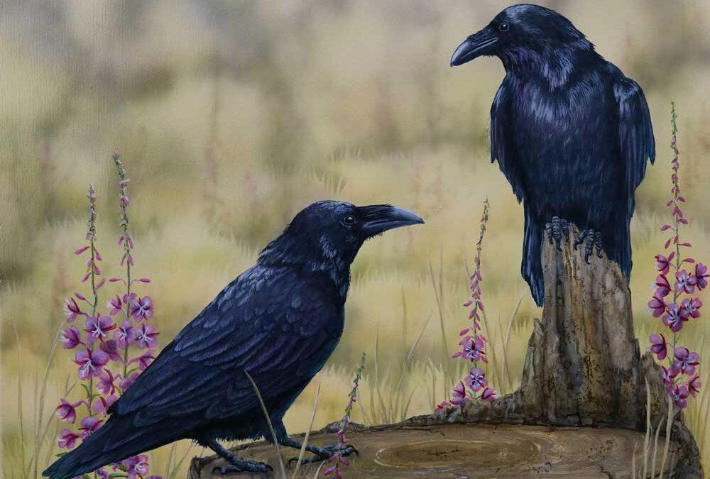 Fireweed & Ravens