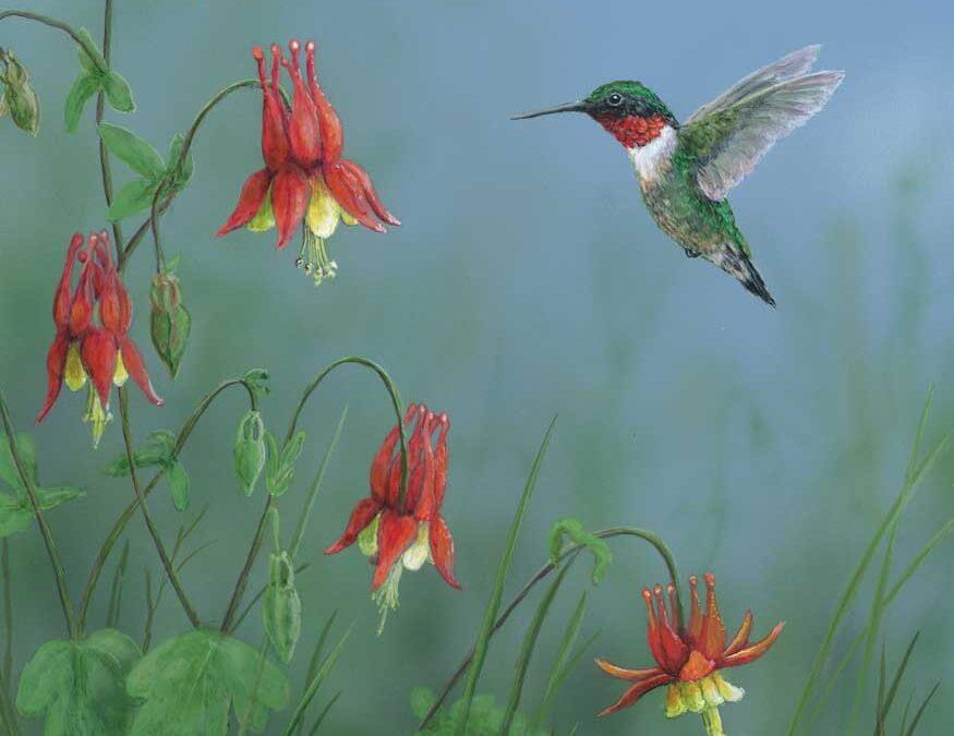 Hummingbird SOLD