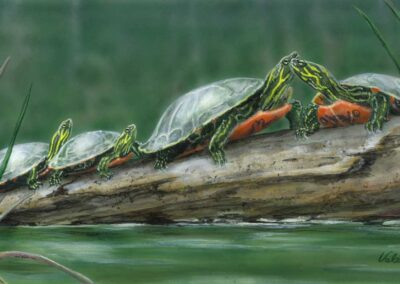 Sunshine Turtles 8×16 $250 CAD