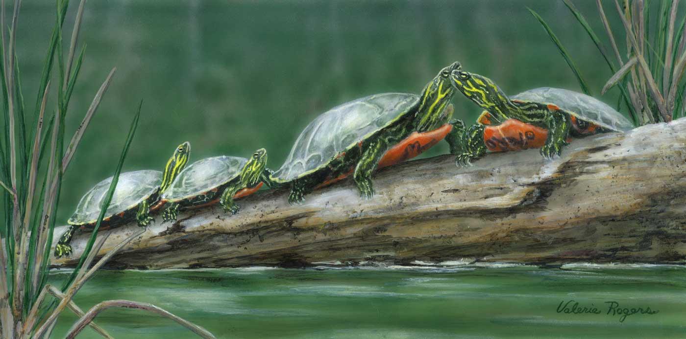 Turtles sunning on log painting